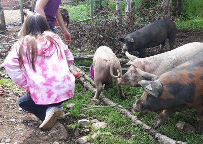 Pettin Pigs